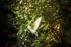 Fridsamma fåglar för vita duvor royaltyfria bilder