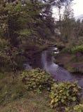 Fridsamma Forest Mountain Stream Royaltyfria Bilder
