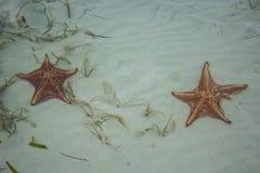 Fridsamma havsstjärnor Arkivfoto