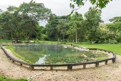 Fridsamma naturliga Hot Springs i en skog Arkivbild