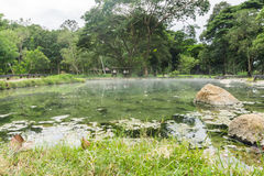 Fridsamma naturliga Hot Springs i en skog Arkivfoton