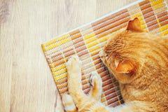 Fridsamma orange röda Tabby Cat Male Kitten Sleeping Arkivbild