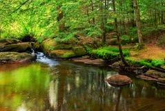 Fridsamt damm i en skog Royaltyfri Fotografi
