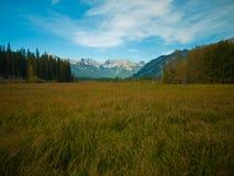 Fridsamt fält i Alberta, Kanada Fotografering för Bildbyråer
