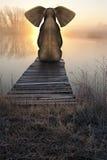 Fridsamt landskap för elefantsoluppgångsolnedgång Royaltyfri Foto