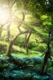 Fridsamt landskap för konst; Det gamla trädet i den gamla magin parkerar royaltyfria foton