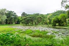 Fridsamt naturligt damm i en skog Arkivbild