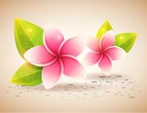 Fridsamt och avslappnande kort med exotiska blommor för brunnsort Arkivbild