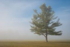 Fridsamt träd i lantligt fält Arkivbilder