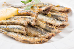 Fried anchovies close up Stock Photos