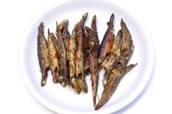 Fried anchovies. Stock Image
