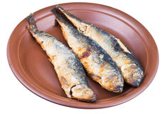 Fried baltic herring on ceramic plate Royalty Free Stock Image