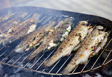 Fried barbecue grill trout Stock Image