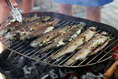 Fried barbecue grill trout Stock Photos