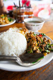 Fried basil leave with chicken on rice. Royalty Free Stock Image