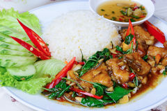 Fried basil leave with snapper fish on rice Royalty Free Stock Photos