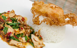 Fried basil with pork and fried egg. Thailand call pad ka pow Royalty Free Stock Image