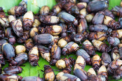 Fried beetles Royalty Free Stock Images