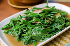 Fried bitter gourd leaf with oyster sauce Royalty Free Stock Images