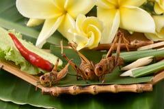 Fried Bombay Locust (succincta Linn di Patanga ) Immagini Stock Libere da Diritti