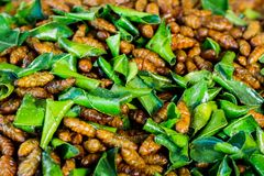 Fried bug with kaffir lime leaf stock photo