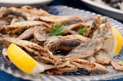 Fried Bulgarian Trachurus Royalty Free Stock Image