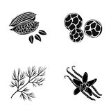 Fried cacao beans, dill, black pepper, vanilla.Herbs and spices set collection icons in black style vector symbol stock Stock Photography