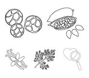 Fried cacao beans, dill, black pepper, vanilla.Herbs and spices set collection icons in outline style vector symbol. Stock illustration Royalty Free Stock Photography