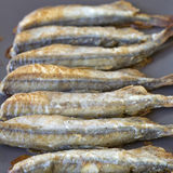 Fried capelin on the table Royalty Free Stock Images