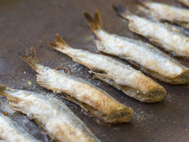 Fried capelin Stock Images