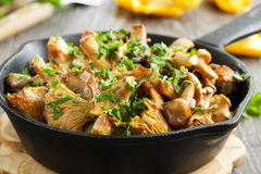 Fried chanterelle mushrooms Stock Photos