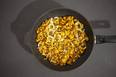 Fried chanterelle mushrooms in a frying pan royalty free stock image