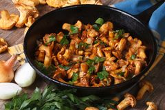 Fried chanterelle mushrooms with onion and parsley in a pan Stock Photos
