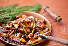 Fried chanterelles Royalty Free Stock Image