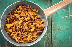 Fried Chanterelles with onions and fresh herbs in skillet Royalty Free Stock Photos