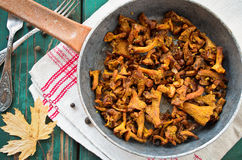 Fried Chanterelles with onions and fresh herbs in skillet Stock Image
