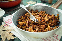 Fried Chanterelles with onions and fresh herbs in skillet Royalty Free Stock Images