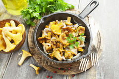 Fried chanterelles. With onions in a frying pan royalty free stock photos