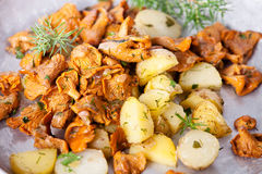 Fried chanterelles with potatoes Royalty Free Stock Photo
