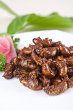 Fried cicada Stock Images