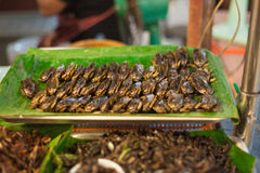 Fried cockroaches Stock Images