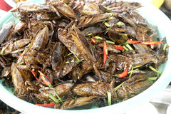 Fried Cockroaches. At a roadside stand in Cambodia Stock Photo