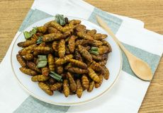 Fried Coconut Worms profondo su un piatto bianco fotografia stock