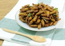 Fried Coconut Worms profondo su un piatto bianco fotografia stock libera da diritti