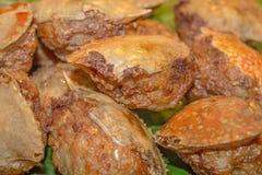 Fried crab. Stock Photos