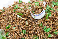 Fried cricket. Royalty Free Stock Image