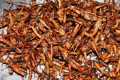 Fried crickets Stock Photos