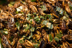 Fried crickets Royalty Free Stock Photo