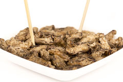 Fried crickets insects Stock Photo