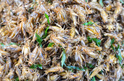 Fried crickets Royalty Free Stock Photos
